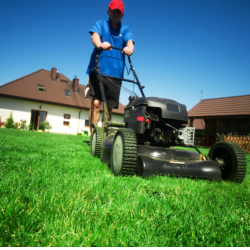 cutting grass in the lawn